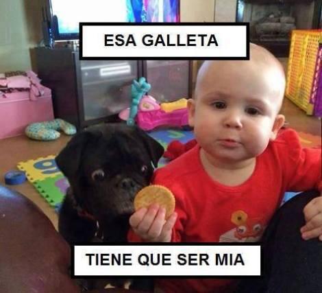 top humor chistes graficos de las redes sociales perro obseso esa galleta sera mia hoy en yecla ofertas